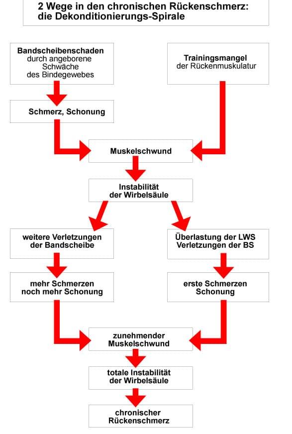 Schön Diagramm Der Oberen Rückenmuskulatur Zeitgenössisch ...